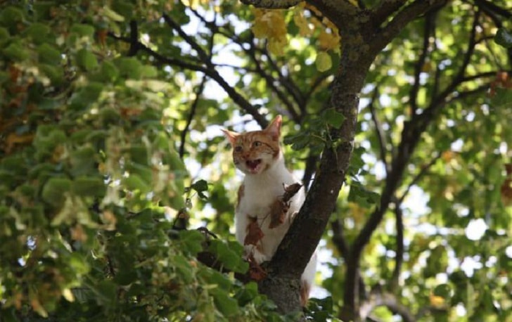 Как быстро и просто снять кота с дерева