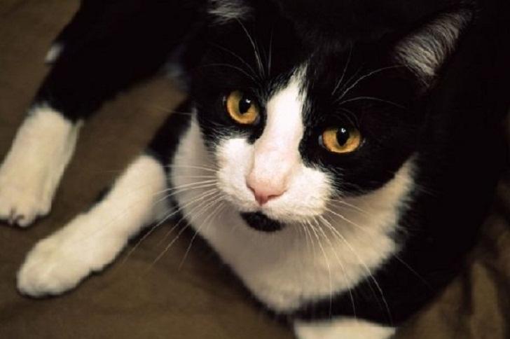 Как подобранный на улице кот спас свою хозяйку