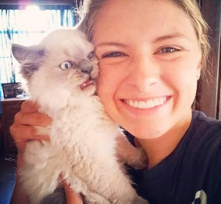 Возмущённые коты протестуют против селфи