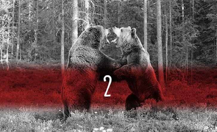 5 способов остаться в живых, если вы встретили медведя
