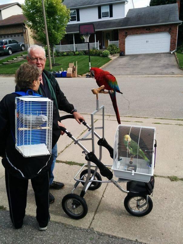 20 забавных фотографий - вот такие соседи