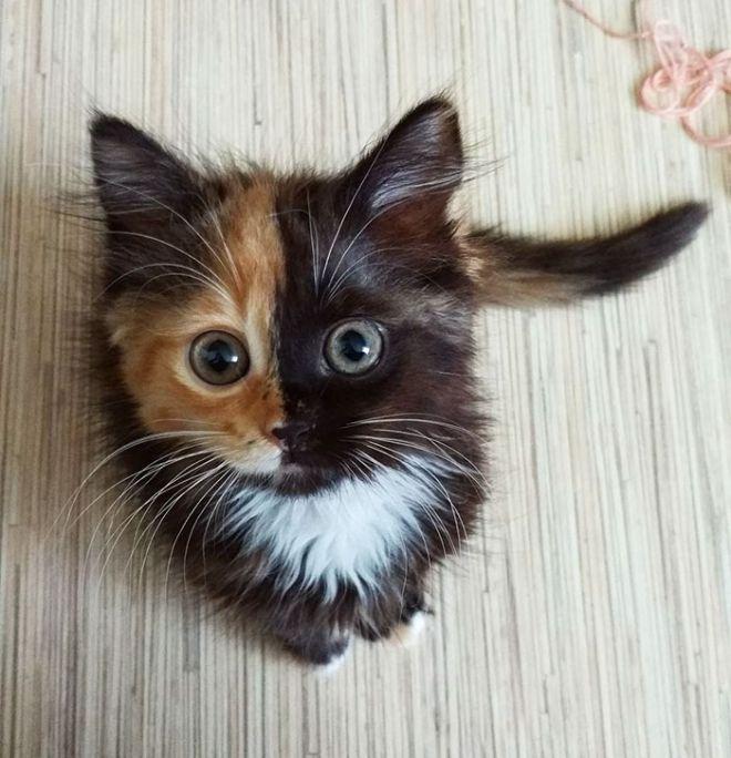"""Два лица"" Кошки Яны"