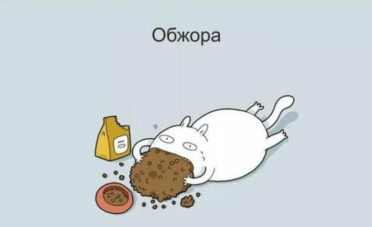 Классификация котов в смешных картинках