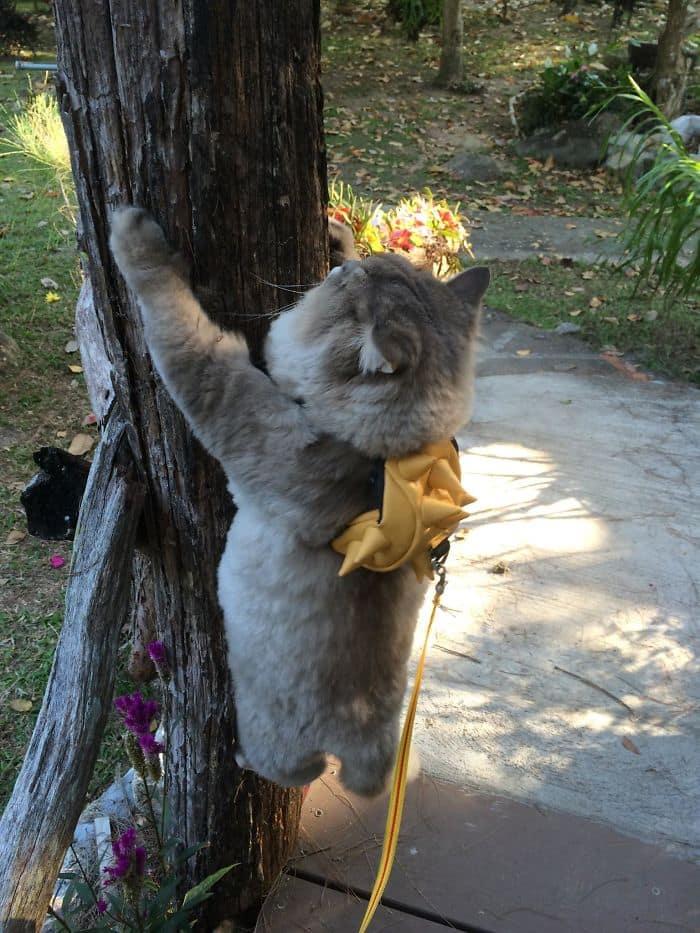 Кошка Bone Bone — знаменитость из Таиланда!
