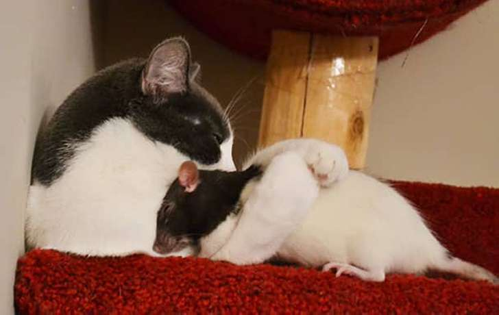 Примеры самой необычной дружбы в мире животных
