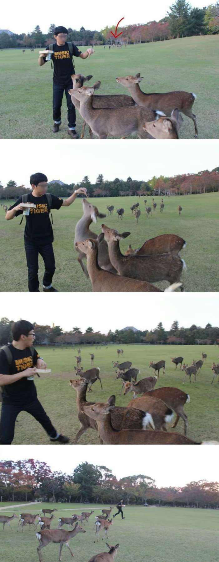 16 смешных фотографий из Интернета, для просмотра которых совершенно не нужен повод