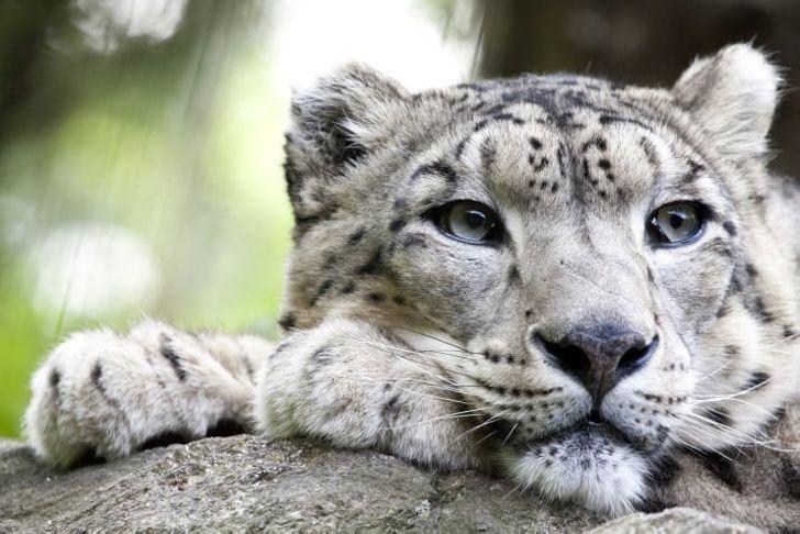 22 неожиданных факта о животных