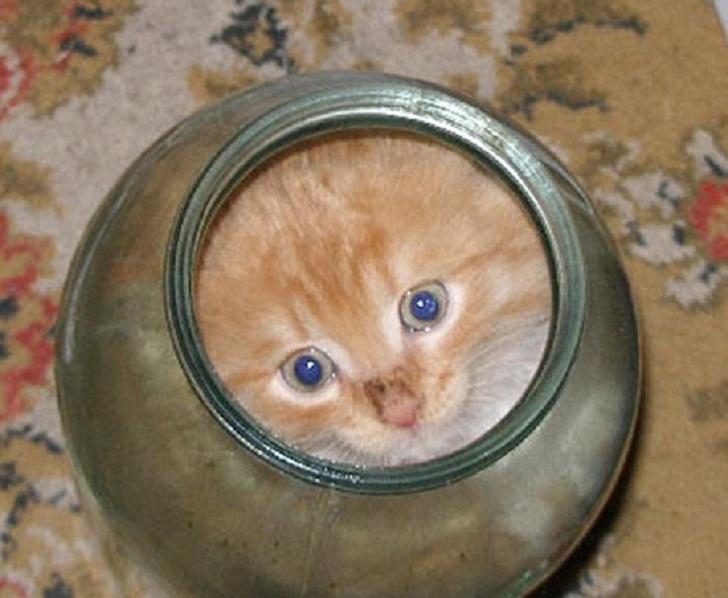 Котёнок залез в банку... удастся ли кошке вытащить его?
