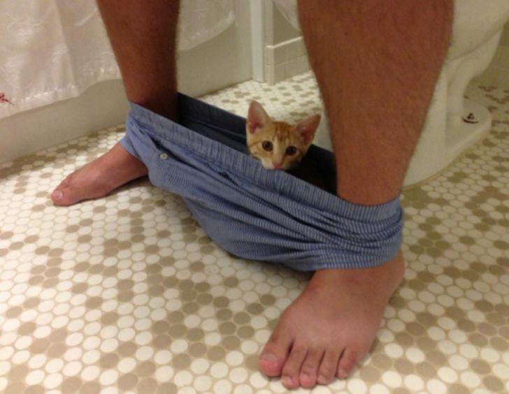 Вы будете хохотать, когда увидите эти фото с котиками