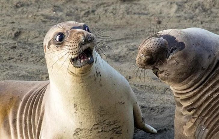 """Самые смешные фотографии конкурса """"Комедийная фотография дикой природы"""" («CWPA»)"""