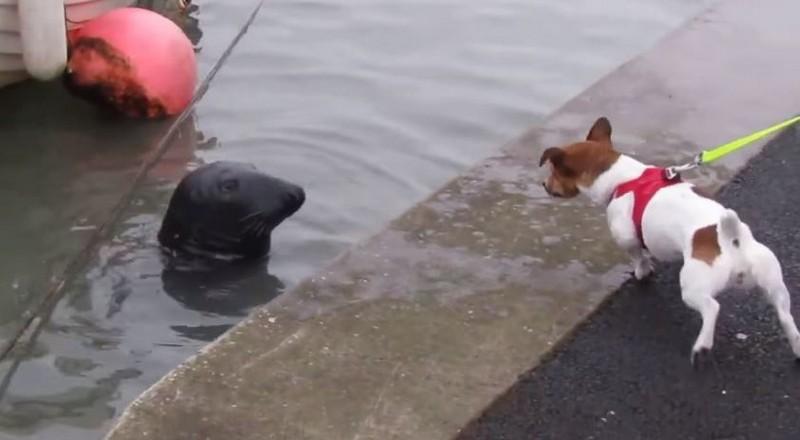 Тюлень Сэмми повадился ходить в рыбный ресторан