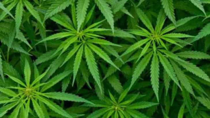 В Грузии декриминализовали употребление марихуаны